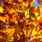 Activiteitenweek herfstvakantie - De bladeren vallen weer
