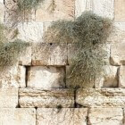 Joodse wortels christendom: Kesjer-cursus