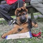 MBO opleidingen met dieren