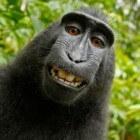 Geheugen: Humor en lachen om beter te onthouden