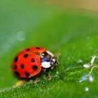 Vertaling dierensoorten Frans-Nederlands