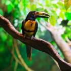 Vogelpark Avifauna: een educatieve schoolreis?