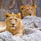 Opleiding dierenverzorger dierentuin