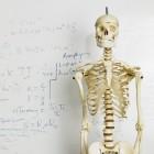 De snijzaal, anatomieles met echte lichamen