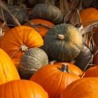 Leuke ideetjes voor Halloween met familie en vrienden