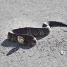 Werkstuk slangen voor kinderen