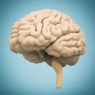 Leren & studeren: het lerende brein