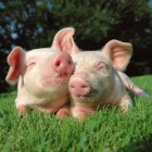 Vertaling dierennamen Engels-Nederlands
