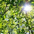 Meten van de fotosynthese